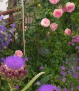 Mein Dach - nein kein Garten - auch wenn ich den Garten bestelle