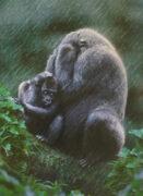 Und solche wunderbaren Tiere lassen wir aussterben. Was tut die Menschheit nur.