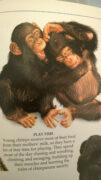 Merke - Primaten spielen gerne